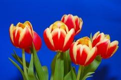 Ein Bündel Tulpen Stockbilder