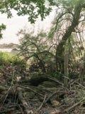 Ein Bündel verringerte Baum-Stämme und Niederlassungen Lizenzfreie Stockfotos