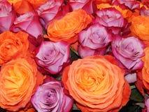 Ein Bündel verschiedene blühende Rosen als Blumenhintergrund Lizenzfreies Stockfoto