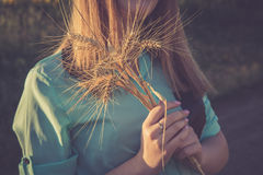 Ein Bündel Weizen in den Händen eines Mädchens Stockbilder