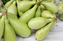 Ein Bündelgrün corlor von Kürbissen verkaufte am Basar Lizenzfreies Stockbild