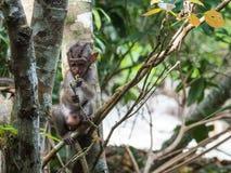 Ein Baby-Affe isst Blumen in einem Wald Lizenzfreies Stockfoto
