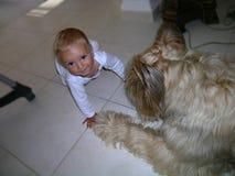 Ein Baby mit großen Augen und großem Hund lizenzfreie stockfotografie