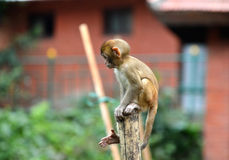 Ein Babyaffe, der auf einem Zaun sitzt Stockfotos