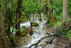 Ein Bach durch Wald Stockbild