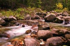 Ein Bach im Wald Stockfoto