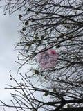 Ein Ballon in einem Baum stockbilder
