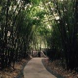 Ein Bambusweg Stockfotografie