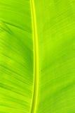 Ein Bananenblatt Stockfoto