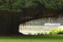 Ein Bantambaum im Park Stockfotografie