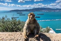 Ein Barbary-Makakenaffe in Gibraltar Lizenzfreie Stockbilder