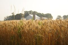 Ein Bauernhof Lizenzfreie Stockfotos