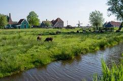 Ein Bauernhof auf den Stadtränden von Amsterdam in den Niederlanden stockbild
