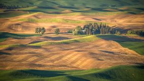 Ein Bauernhof im Palouse, wie von Steptoe-Butte gesehen stockbild