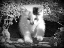 Ein Bauernhof-Kätzchen in Schwarzweiss Stockfoto