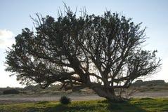 Ein Baum Lizenzfreie Stockbilder