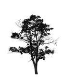 Ein Baum Stockfoto