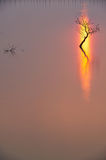 Ein Baum Lizenzfreies Stockfoto