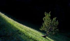 Ein Baum Stockfotografie