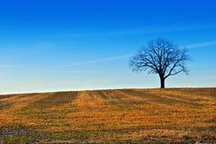 Ein Baum auf dem Bauernhofgebiet Stockfotos
