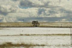 Ein Baum auf dem Colorado-Grasland Stockfoto