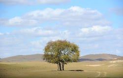 Ein Baum auf dem Gebiet unter Himmel und Wolken Lizenzfreie Stockfotos
