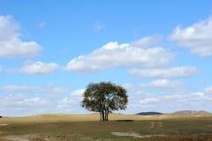 Ein Baum auf dem Gebiet unter Himmel und Wolken Stockfoto