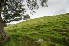 Ein Baum auf dem links stellt einen Rahmen zu einer gepflogenen Gras durchgesetzten Forderung zur Verfügung Stockbild