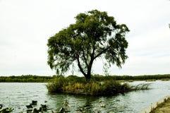 Ein Baum auf dem See stockbild