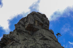 Ein Baum auf die mounatin Oberseite Lizenzfreies Stockfoto