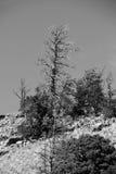 Ein Baum auf einem Berg lizenzfreies stockbild