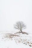 Ein Baum auf einem nebeligen Winterfeld. Lizenzfreies Stockfoto