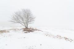 Ein Baum auf einem nebeligen Winterfeld. Stockfotografie