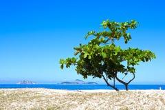 Ein Baum auf einem Strand Lizenzfreies Stockbild