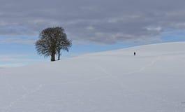 Ein Baum auf einem winterlichen Hügel Lizenzfreies Stockfoto