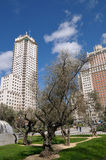 Ein Baum auf ?Plaza de Espana?, Madrid Lizenzfreies Stockfoto
