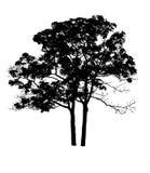 Ein Baum auf Weiß Stockbild