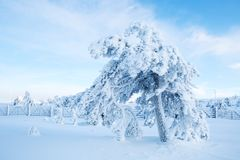 Ein Baum bedeckt mit starken Schneefällen mit blauem Himmel in Lappland Finnland, Lizenzfreies Stockfoto
