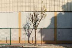 Ein Baum, der allein im Metallnetz deing ist Stockbild