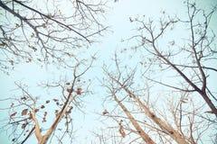 Ein Baum, der alte Blätter fallenläßt Lizenzfreies Stockfoto