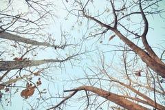 Ein Baum, der alte Blätter fallenläßt Stockbild