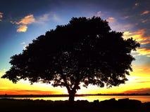 ein Baum in der Bucht Stockfotos