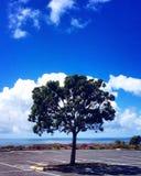 Ein Baum, der den Ozean gegenüberstellt Lizenzfreies Stockbild