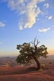 Ein Baum, der die Ansicht in Utah aufpasst Lizenzfreie Stockbilder