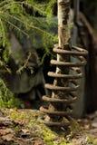 Ein Baum, der durch die Schraubenfeder wächst lizenzfreies stockfoto