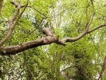 Ein Baum, der durch eine Überdachung von Blättern im Wald stößt Stockbilder