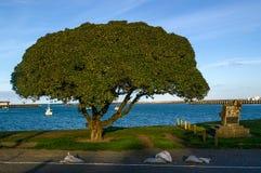 Ein Baum an der Küste Lizenzfreies Stockfoto