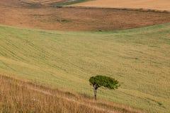 Ein Baum in der Landschaft Stockfotos