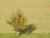 Ein Baum in der Landschaft Lizenzfreie Stockbilder