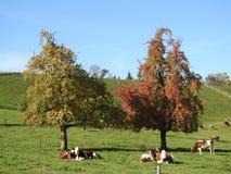 Ein Baum in der Landschaft Stockbild
